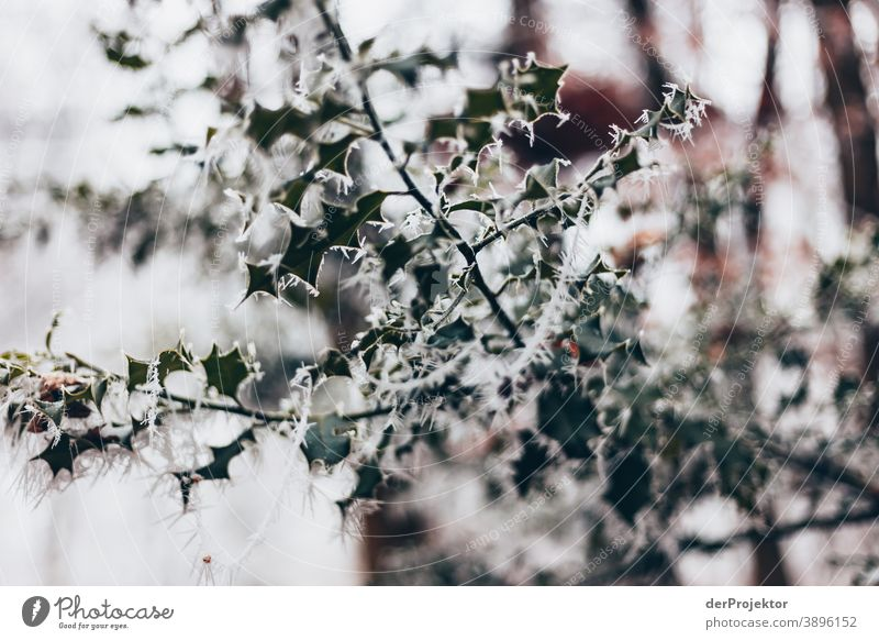 Hoarfrost covered leaves in Wiesbaden Hoar frost Frozen Miracle of Nature Fascinating Colour photo Acceptance Plant Deciduous tree Tree Structures and shapes