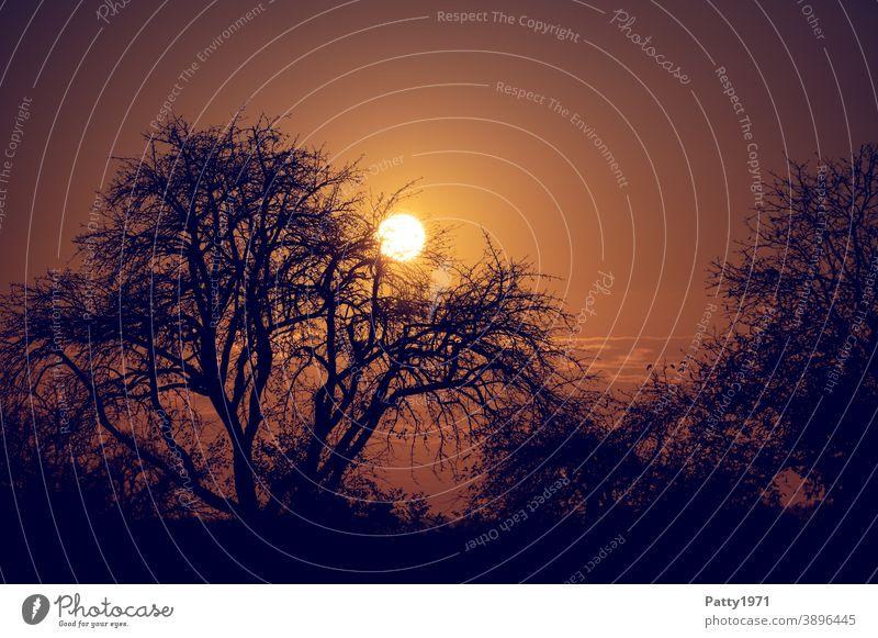 Sun disappears behind bare trees. Backlight shot. Landscape Sunset Dusk Silhouette Bleak Nature Evening Sky Twilight Exterior shot Tree Deserted Sunlight Light
