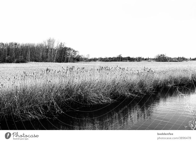 River plain overgrown with reeds, trees and bushes on the horizon, diagonally on the lower right a river section river landscape Landscape Black and white image