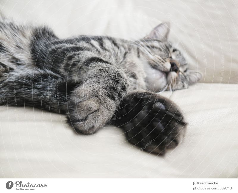 Cat Beautiful Relaxation Calm Animal Baby animal Gray Lie Leisure and hobbies Sleep Safety Break Pelt Serene Fatigue Pet