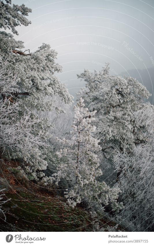 #A0# Winter forest at winterwalden Winter vacation Winter mood Winter's day Winter light Snow hoar frost chill trees Nature Phenomenon Natural phenomenon Frost