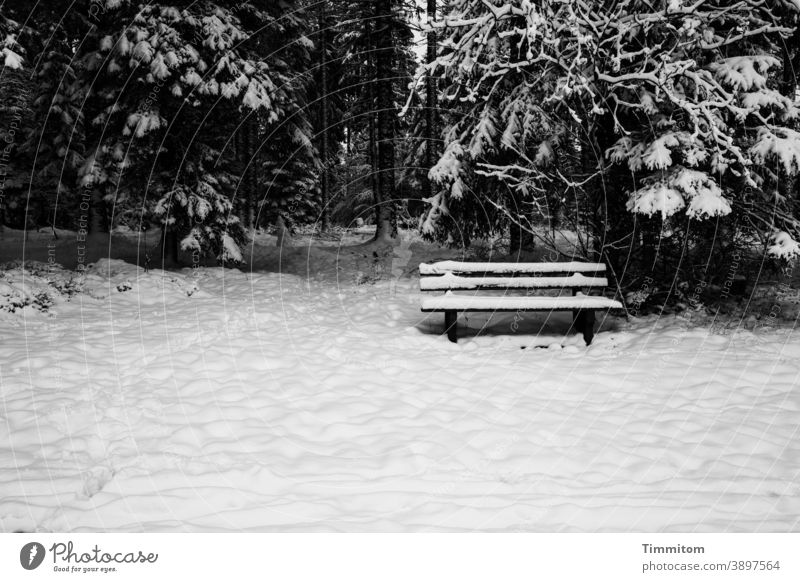 A snow-covered bench invites you to linger Winter Snow Forest trees Black Forest Nature Cold White Black & white photo Deserted off Tracks