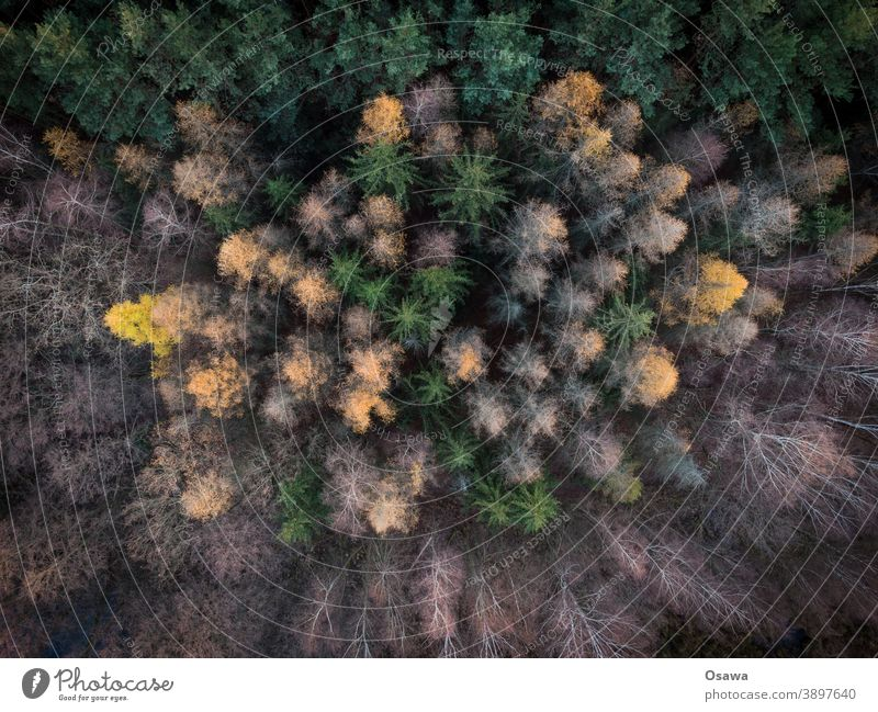 Autumn forest from above texture Pattern Aerial photography aerial photograph Gold Plant Deserted Day Orange Colour photo Green Exterior shot Environment Tree