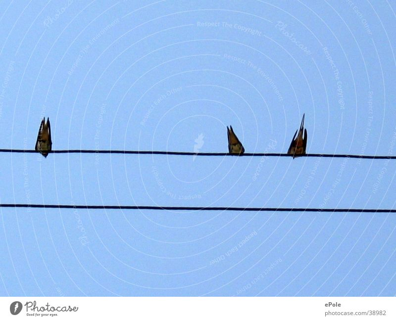 Bird Electricity Transmission lines