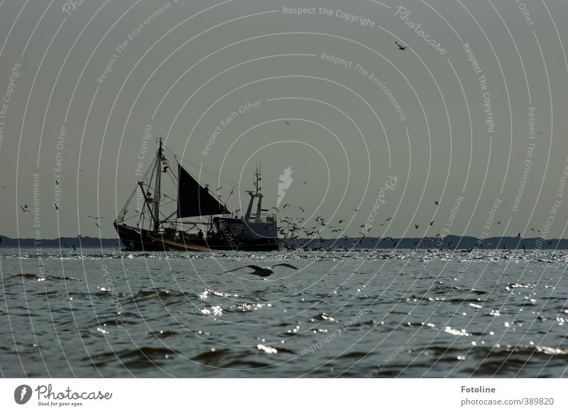 Kutter ahoy! Water Sky Cloudless sky Waves Coast North Sea Ocean Animal Bird Flock Free Large Infinity Bright Cold Wet Gray Black White Watercraft Crab cutter