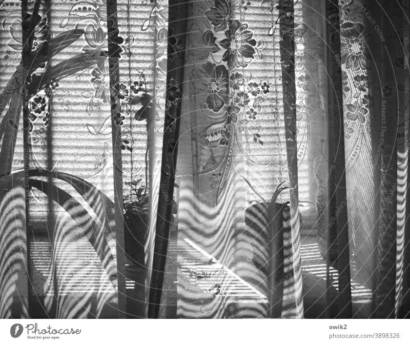 Chisinau Window Sunlight Curtain Drape Structures and shapes Pattern Deserted Long shot Interior shot Detail Black & white photo Calm Window board