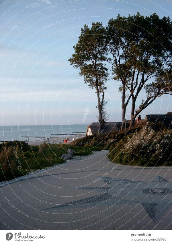 Tree Beach Wind Beach dune Baltic Sea Cliff