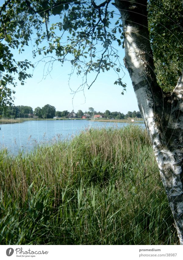 Nature Sun Vacation & Travel Europe Common Reed Baltic Sea Blue sky Mecklenburg-Western Pomerania Boddenlandscape NP