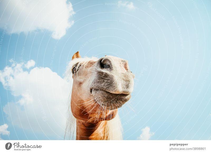 of course my horse Horse Laughter Funny Exterior shot Animal portrait Joy Muzzle Snout Colour photo Animal face Close-up Nose Nostrils Mammal Deserted Pet Pelt