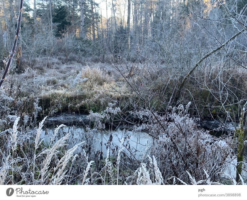 Morning walk with hoarfrost Hoarfrost in the morning Brook Marsh Autumn Winter reed grasses Forest morning walk Lake Starnberg Bog