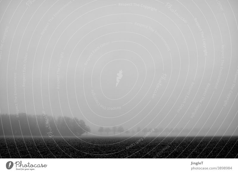 limited horizon Black & white photo Fog Horizon Line Field Tree trees Forest woodland Sky Cloud cover Nature Landscape Exterior shot Environment Deserted Cold