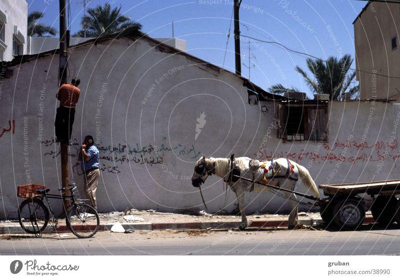 Telephone work, Gaza 1995 Israel Cart Bicycle Man Telegraph pole Repair Wall (building) Climbing Horse Horse and cart Exterior shot Beautiful weather 2