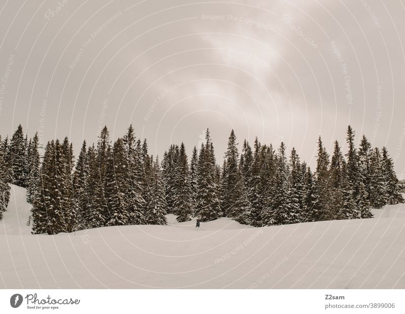 South Tyrolean Ski Resort | Ratschings Relaxation Italian trees Nature Skiing snowboarding Winter sports Landscape winter landscape chill sheep Sports Tourism