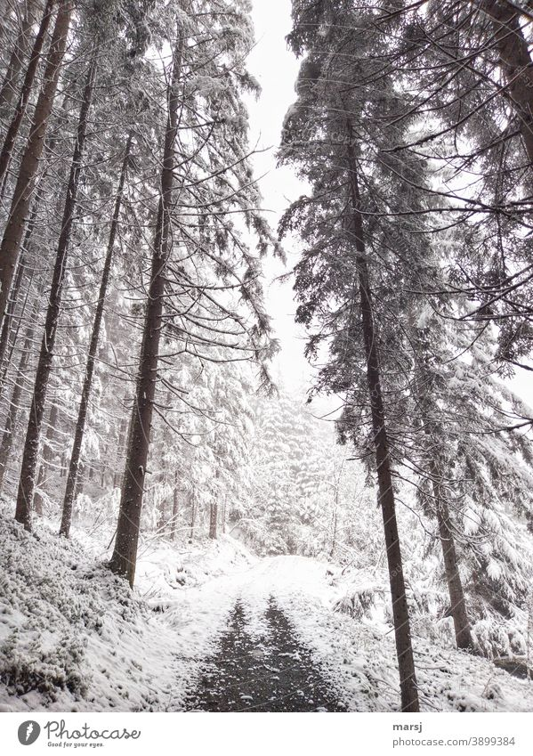 Winter hiking trail in the spruce forest. Threateningly falling lines. Winter mood Winter's day Cold Nature Winter magic winter Snow Hiking trails Promenade