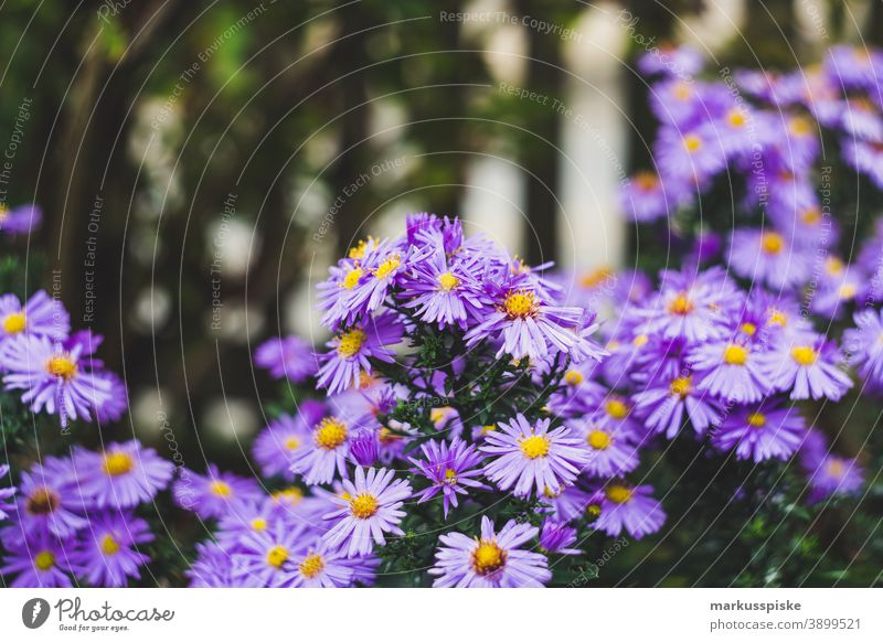 Home Garden Flower beautiful beauty blaze of color bloom blossom bokeh bright brown bunch closeup colorful colors colour countryside fantasy flora floral