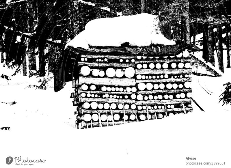 symmetries in the woods with snow one nature outdoor forest background woodpile pine firewood winter tree log natural wooden material landscape cold cut brown