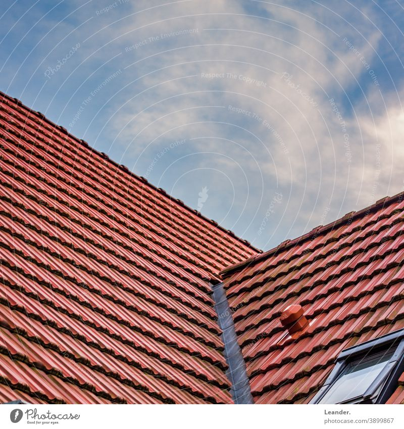 roof Roof Tiled roof Red Summer Summery Sky Window