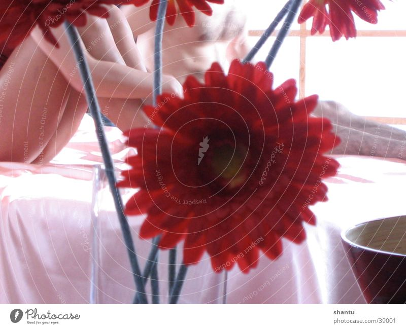 Woman Human being Man Flower Couple Bed