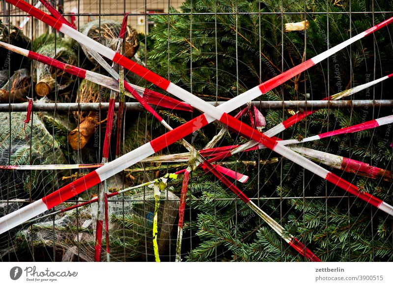 Christmas tree behind flutterband Tree Coniferous trees christmas building Advent christmas time Net Packaging tied Packaged Transport tethered Belt