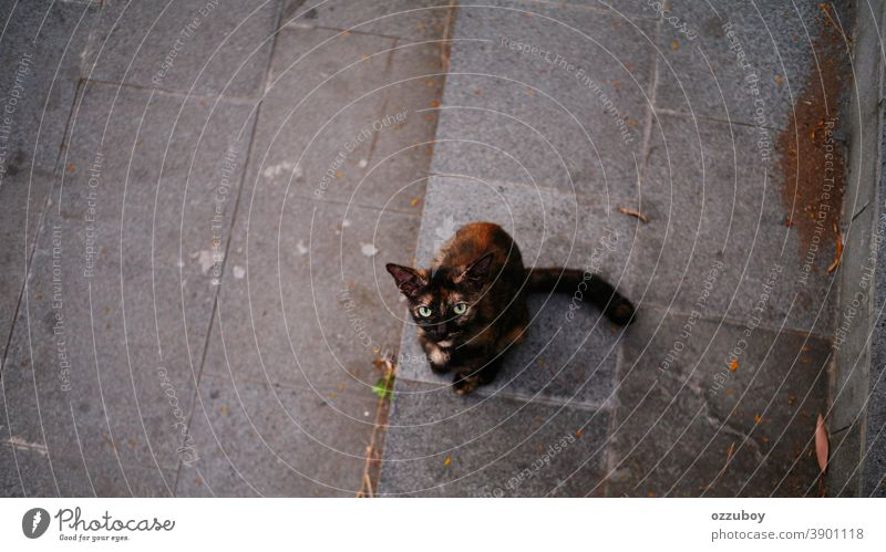 domestic cat looking with curious Cat Domestic cat Pet Animal Mammal Cat eyes Animal portrait Whisker Animal face Looking Looking into the camera Curiosity