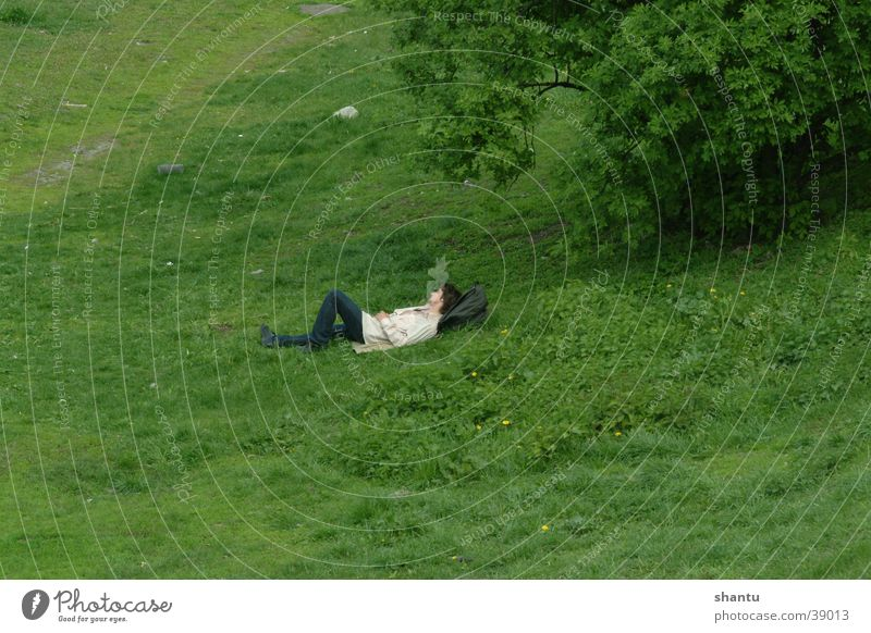 relaxation Meadow Grass Calm Summer Lawn Shadow