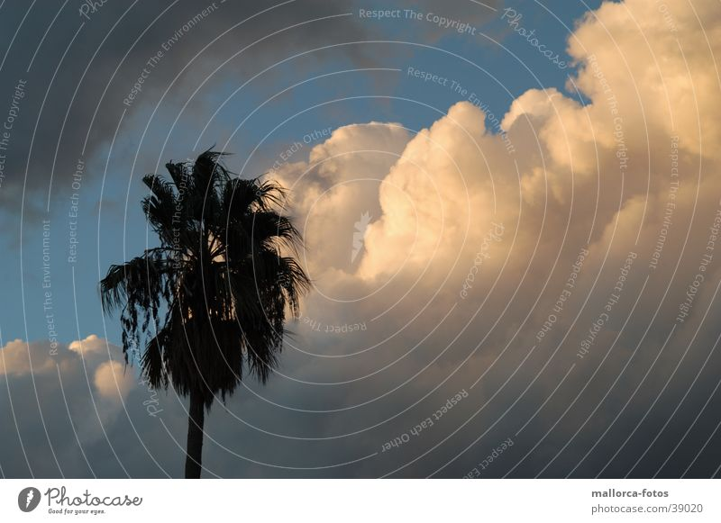 Shortly before the storm Palma de Majorca Clouds Gale Storm Wind