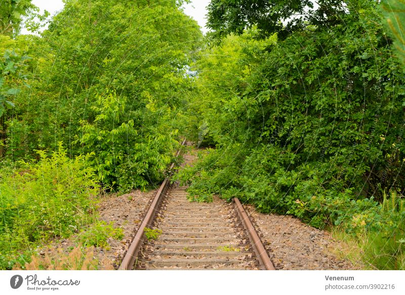 Old railway line in Germany Track Track bed rails Railroad Railway sleepers Forest forests Tree trees