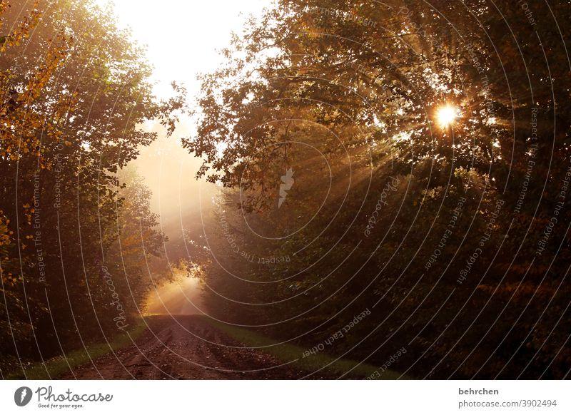 when the day awakens Hope Back-light solar star Sunrise Landscape Idyll Sunbeam Automn wood autumn walk Autumnal colours autumn mood Deserted Beautiful weather