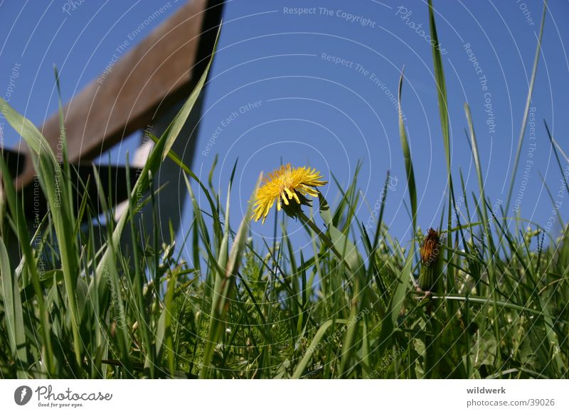 Sky Blue Yellow Meadow Blossom Spring Germany Bench Dandelion