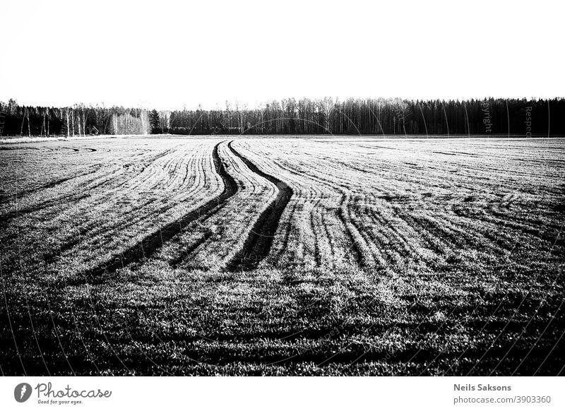 tracks of tractor on agricultural field Agricultural agriculture cereal corn country countryside ear farm farming food grain growth harvest land landscape