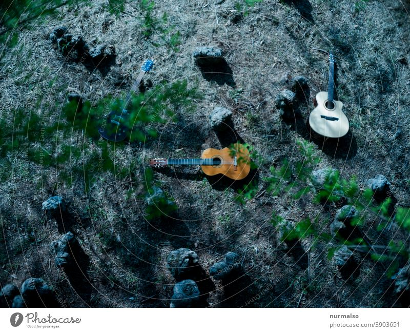 Play in the wooden Music Forest guitars Analog aukustisch pages Sound hobby Green Sustainability domestic music Musician Busker aukustikgitarre Freedom