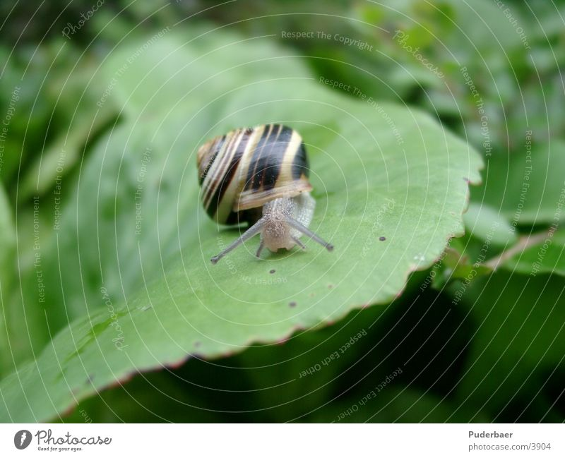 Snail on blade Slowly Leaf Small Feeler Frontal Transport