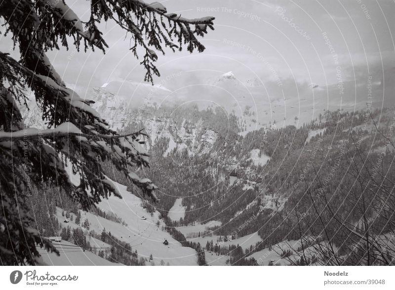 Dark n Dust Winter Fog Hoch-Ybrig Mountain Snow Black & white photo