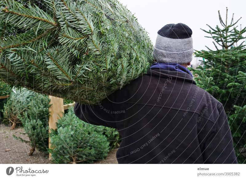 A man carries a Christmas tree in a net on his shoulders between felled and erected fir trees and removes himself / systemically relevant / Christmas tree buying