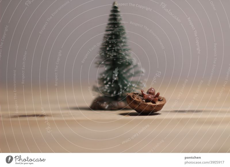 A Black Baby Jesus lies in a manger made of a walnut shell in front of a fir tree. Christmas Christmas decoration Christmas tree Festive Tradition Fir tree