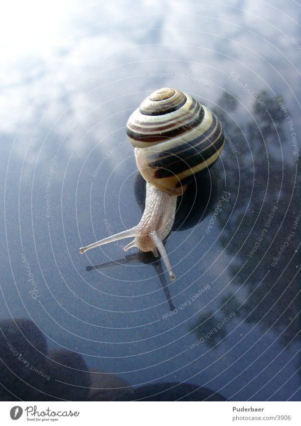 Sky Car Transport Snail