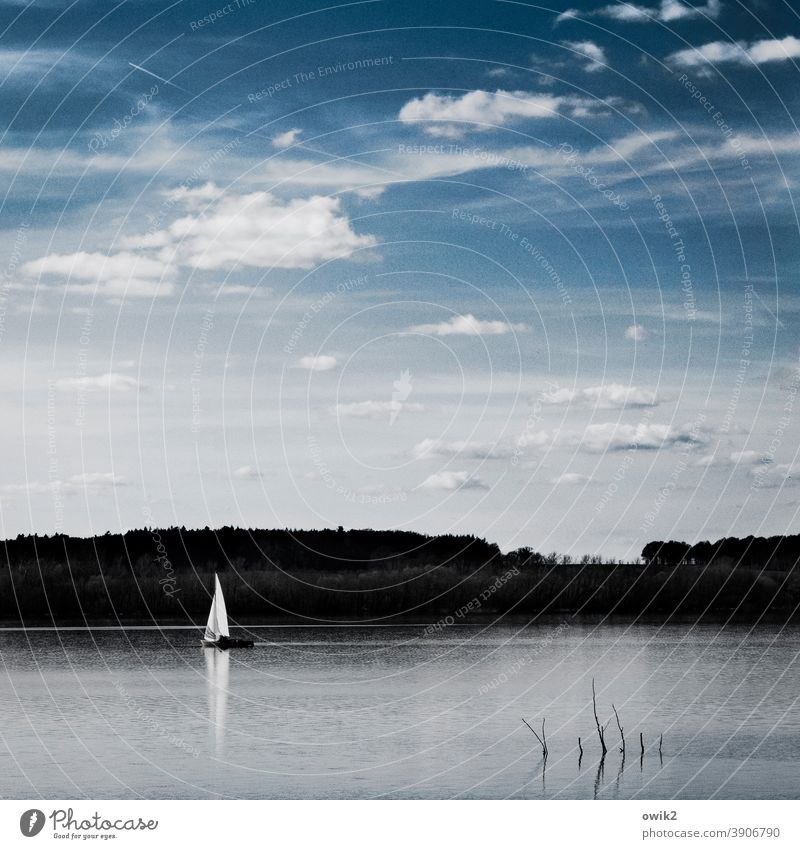 Into the distance Boating trip Sailboat Blue Happy coast Colour photo Sunlight Landscape Water Air Sky Clouds Nature Environment Wind Beautiful weather Movement