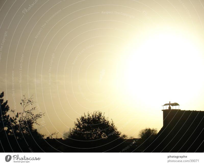 apocalypse Silhouette Sun Morning Contrast