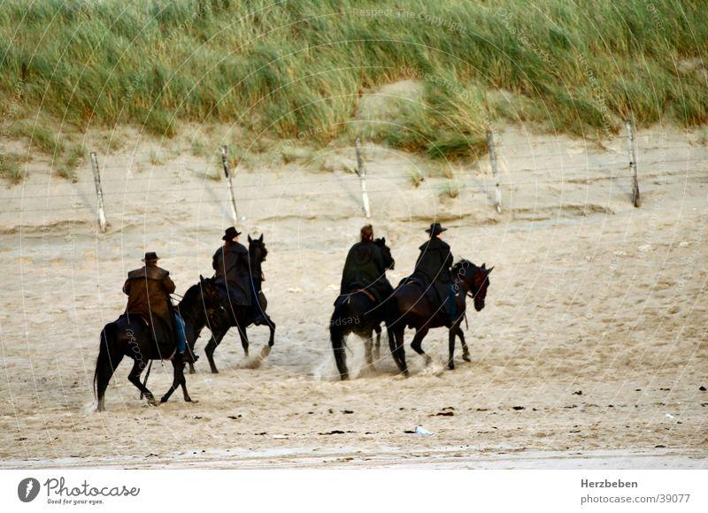 The beach riders Horse Black Beach Group Rider Sand Nature Beach dune