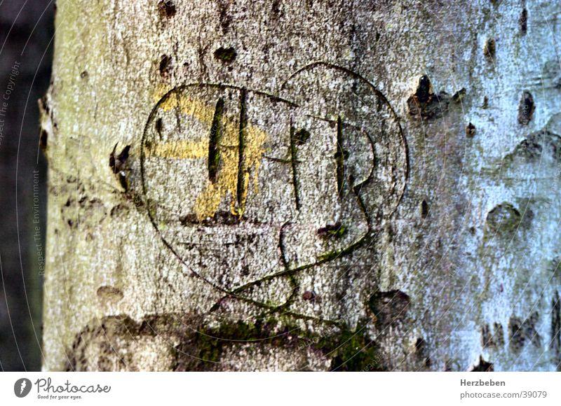 Back then Tree Tree bark Kitsch Heart Love Nature
