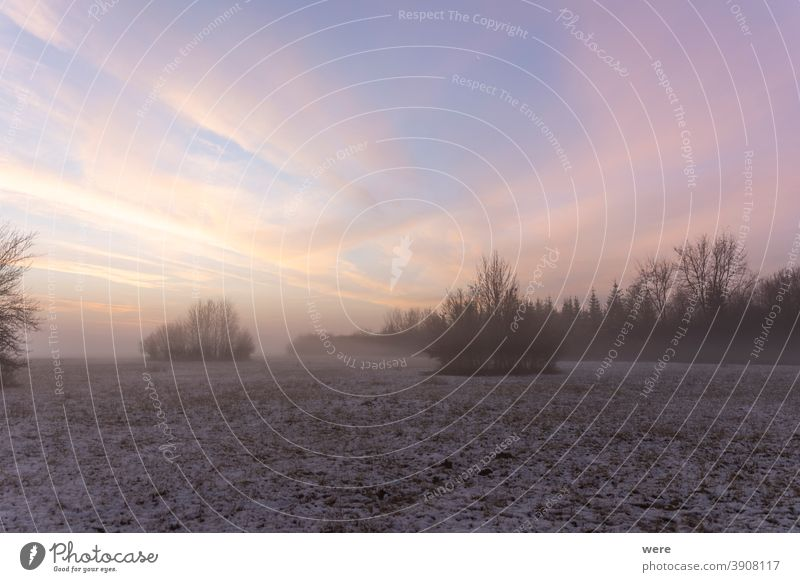 Sunrise over snowy meadow behind bush with ground fog in winter cloud cold colorful colorful clouds copy space landscape mist morning morning mist morning sun