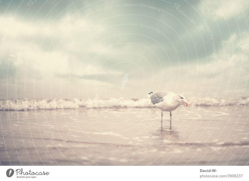 Seagull with fish in beak at the sea Fish Beak To feed Snapshot North Sea Baltic Sea Water Bird coast