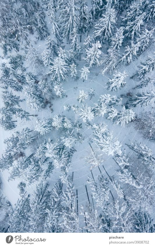 winter forest Forest Winter trees Snow Landscape Bird's-eye view Aerial photograph Nature Cold Deserted Colour photo Tree Environment Subdued colour Weather