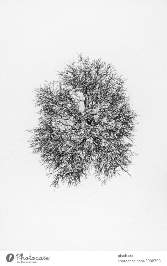 Tree in winter Winter Snow drone Bird's-eye view Landscape Nature Cold Environment Aerial photograph Black & white photo fine Contrast Exterior shot Day