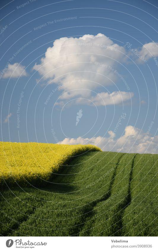 Rape field in the Odenwald Canola Canola field rock acre Agriculture Landscape Manmade landscape cloud cloukwn Hesse Germany Europe furrow furrows Field Sky