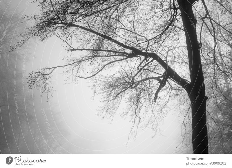 Cloud forest - it is slowly getting brighter Fog Forest Tree branches Bleak Nature Autumn Winter Deserted Cold Environment Shroud of fog Black & white photo