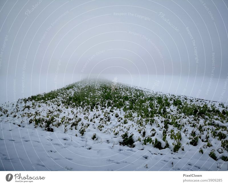 onset of winter Winter Cold Snow Frozen Hoar frost White Nature Meadow Freeze Grass Sky, Grey, December, Cloudy
