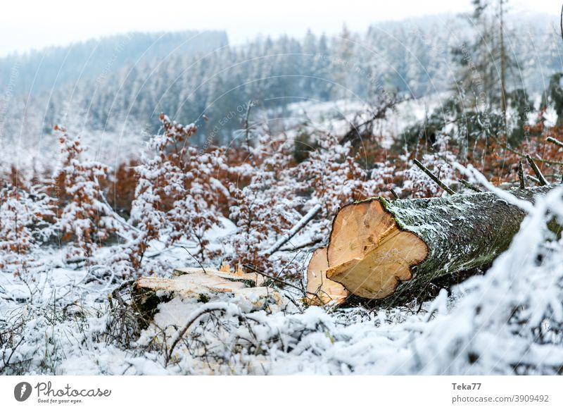 The felled winter tree Winter Tree Frost Winter forest Snow Ice Bark-beetle