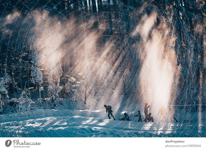 People with sledges in the Harz Mountains against the light Joerg farys National Park nature conservation Lower Saxony Winter Experiencing nature Nature reserve
