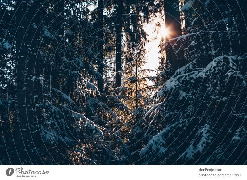 Snow-covered coniferous trees with sun in the Harz Mountains II Joerg farys National Park nature conservation Lower Saxony Winter Experiencing nature